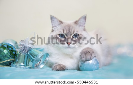 Neva masquerade cat on blue Christmas background