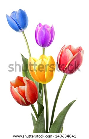 New arrangement color flowers design. Isolated on white - stock photo