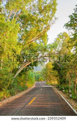New asphalt road in green forest - stock photo