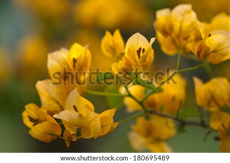 New blooms welcoming the freshness of spring season - stock photo