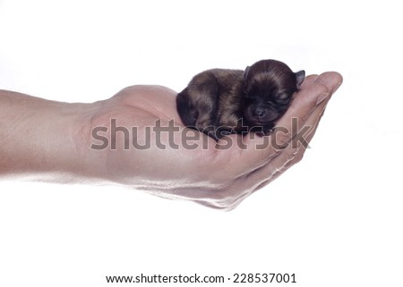 New born dog being held in secure adult hand - stock photo