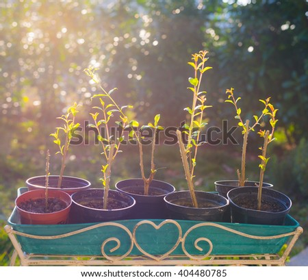 New born home made organic pomegranate sets in vase, shot in backlight with very shallow depth of field and soft light. Concept of healthy eating and home made plant nursery. - stock photo
