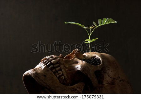 new born, young tree growing on skull