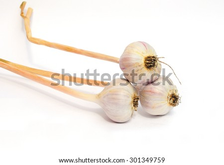 New crop of organic garlic (Allium sativum) bulb isolated on white background. Garlic is a fundamental component in many or most dishes of various regions. - stock photo