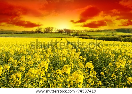 New Day Dawns over Healthy Harvest - stock photo