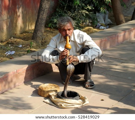 "New Delhi, India - 19 November 2016. Man playing for the dancing cobra. The Indian cobra is a species of the genus Naja found in the Indian subcontinent and a member of the ""big four"" species."