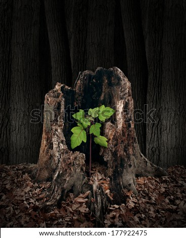 New development and renewal concept as a hollow old rotting tree stump with a growing green sapling emerging and replacing the past as metaphor for revival in business and in life. - stock photo