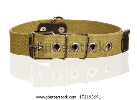 New dog collar on the white background - stock photo