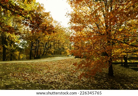 New England Foliage - stock photo