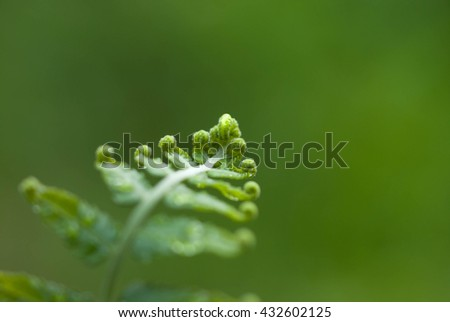New Fern.A New Fern Frond Opening. - stock photo
