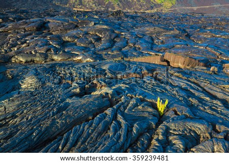 New fern growing through the molten cooled lava in Hawaii Volcanoes National Park, Big Island, Hawaii - stock photo