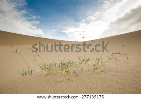 New green grass growing on sand - stock photo
