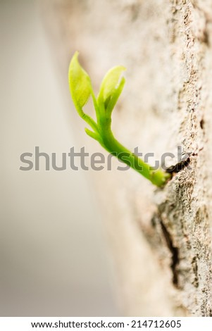 New green leaves sprouting from brown bark of old trunk  - stock photo