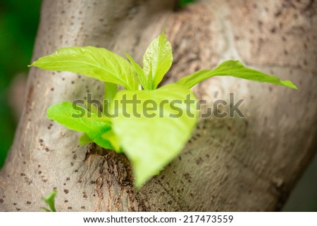 New green top growing from big brown trunk - stock photo