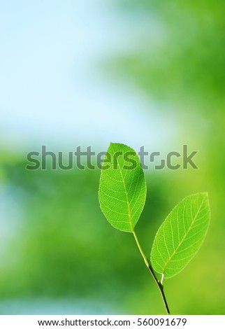 new growing green leaf in spring day, vertical composition