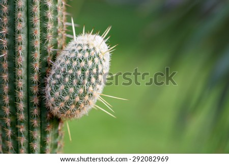 New grown-up branch of cactus on green grass blur background in spring summer - stock photo