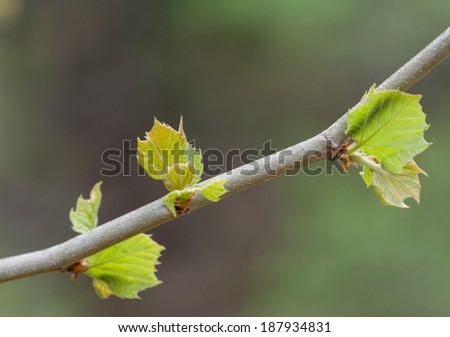 new growth in spring at Vickery Creek - stock photo