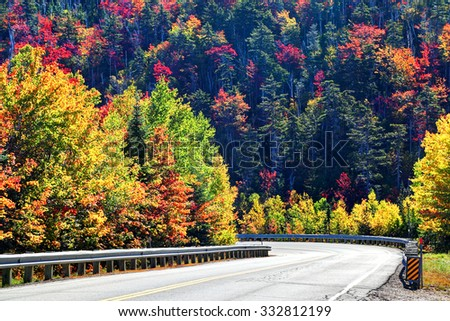New Hampshire in the Fall: Back-lit trees and leaves make the forest glow as if on fire  - stock photo