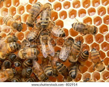 New honey cells and working bees - stock photo
