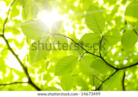 new leaf and sun ray - stock photo