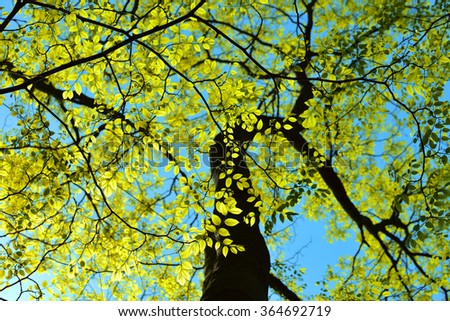 New leaves, spring background - stock photo