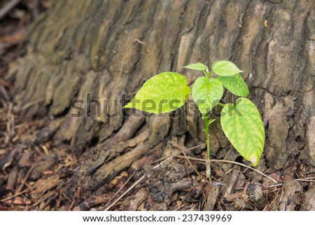 New leaves sprouting from the trunk of a tree - stock photo