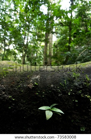 New life begin of lonely little tree - stock photo