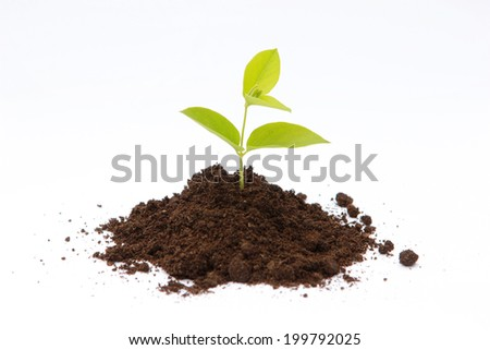 New life Green sprout growing from soil.  - stock photo