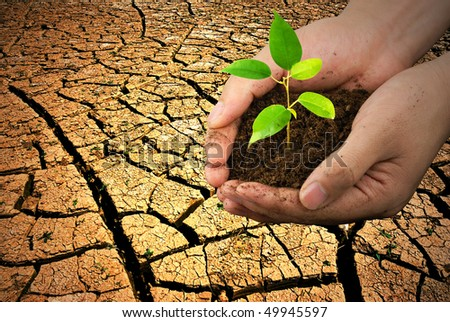 New life in hand over cracked earth,Concept. - stock photo