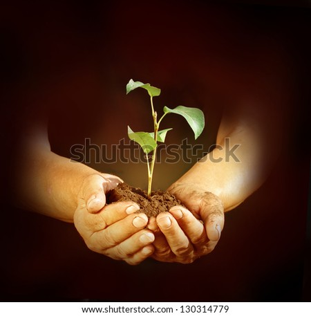 New life in hands - stock photo