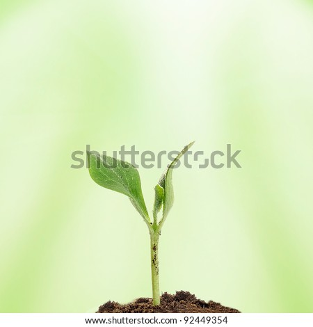 new life: little green plant growing in the soil - stock photo