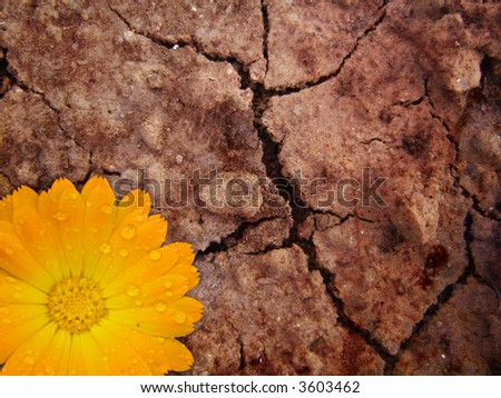 new life on cracked earth - stock photo