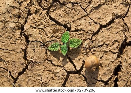 new life on the dry soil cracks - stock photo