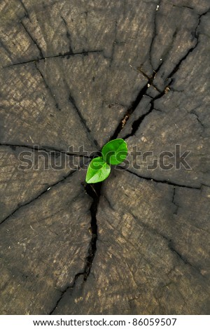 new life on the timber - stock photo