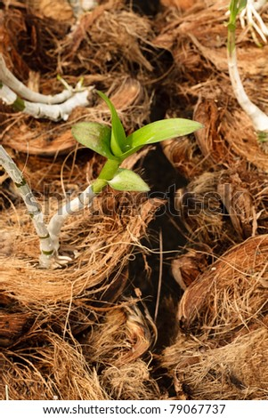 New life orchid in Nursery - stock photo