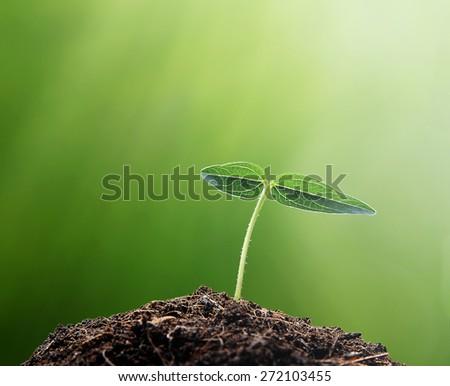 New life , Plant grow , Ecology concept , tree concept  - stock photo
