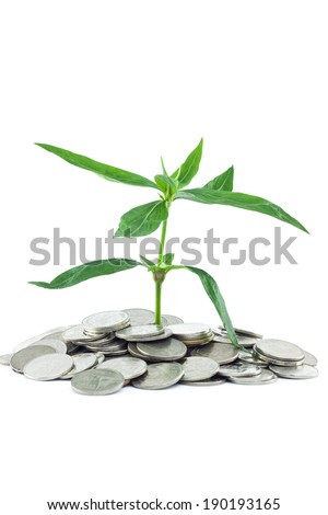new life small plant growing on money