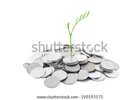 new life small plant growing on money - stock photo