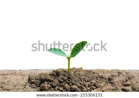 new life small tree   - stock photo