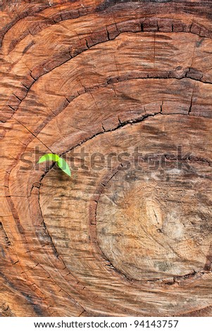 New life with the old trees. - stock photo