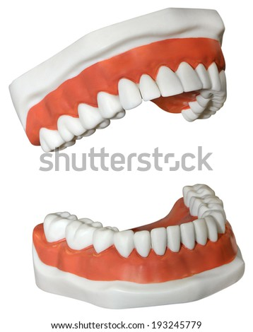 New medical Dentures isolated on a white background  - stock photo