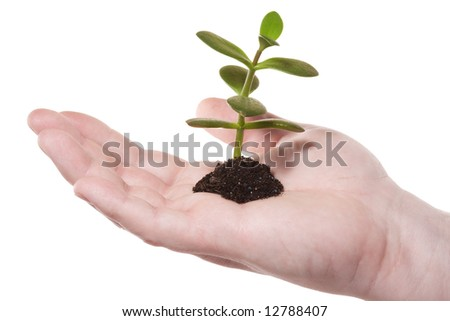 New plant sprouting from a hand - concept for growth. Isolated on white [with clipping path].