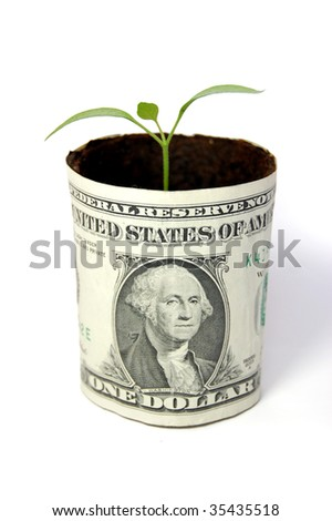 New seedling growing from a one dollar note