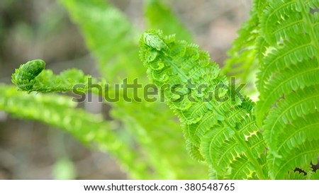 new sping fern close-up in the forest - stock photo