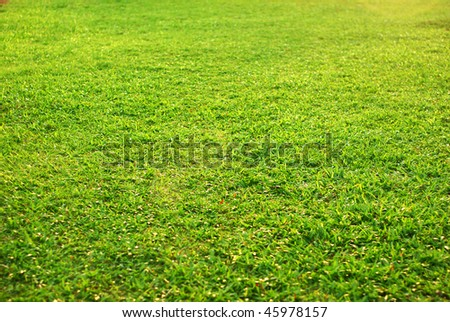 new spring green grass - stock photo