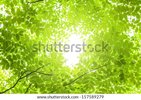 new tree leaves budding in the spring - stock photo