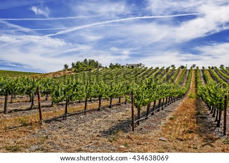 New vineyards and wineries on the scenic hills of the California Central Coast where vineyards grow a variety of fine grapes for wine production, near Paso Robles, CA. on scenic Highway 46. - stock photo