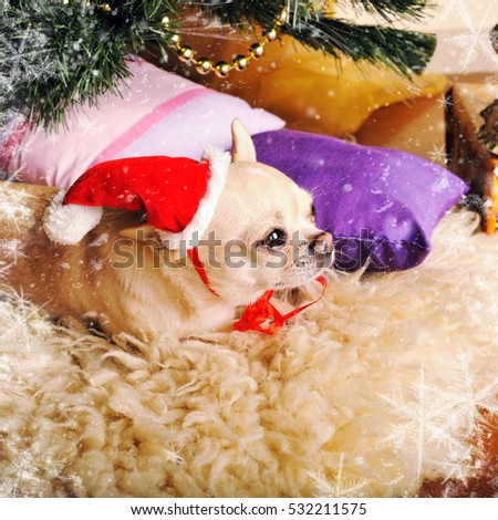 New year card with cute chihuahua dog in Santa hat lying on a fur under the christmas tree