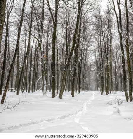 New Year landscape of mysterious winter forest with snowstorm and footpath in a fog, Russia - stock photo