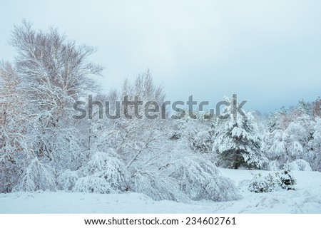 New Year tree in winter forest. Beautiful winter landscape with snow covered trees. Trees covered with hoarfrost and snow. Beautiful winter landscape in the forest. Sunset